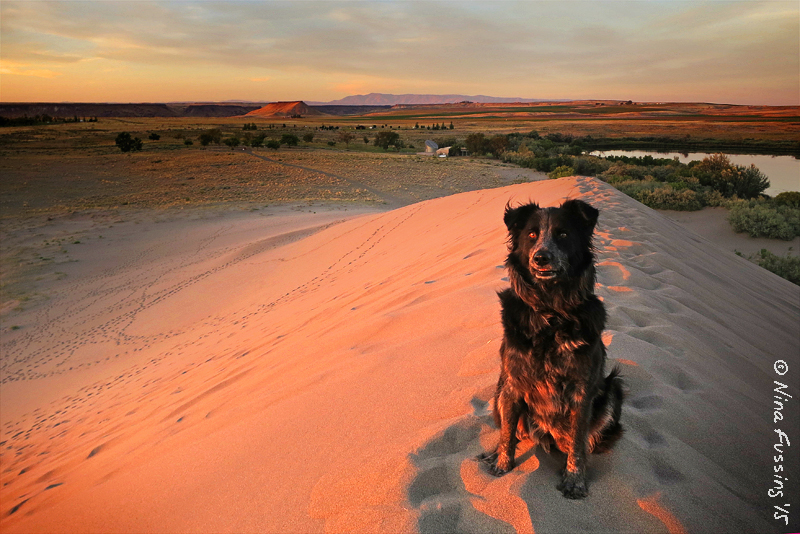 On The Dunes At Sunset