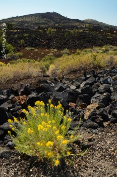 The stark landscape at Craters Of The Moon