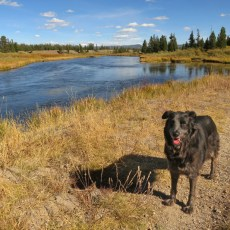 NF Campground Review – Bakers Hole, West Yellowstone, MT/WY