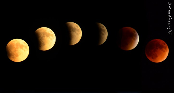 We caught the supermoon eclipse on our last day in Trinidad. This won't happen again until 2033.