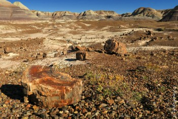 Painted desert with a side of petrified wood