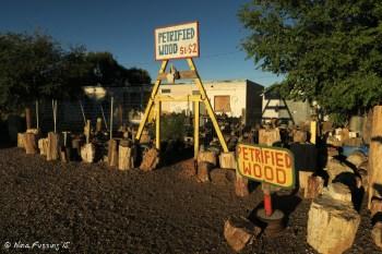 On-site petrified wood display.