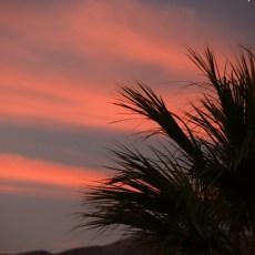 Two Weeks Amongst The Palms – Desert Hot Springs, CA