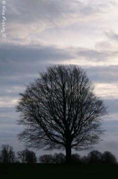 Grey English skies