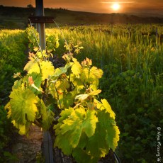 Re-Discovering Our Inner Winos – Paso Robles, CA