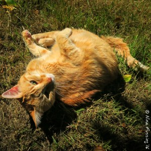 Ahhh, to be a kitty cat in the grass in summer