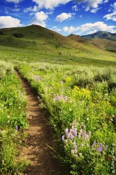Adams Gultch trails