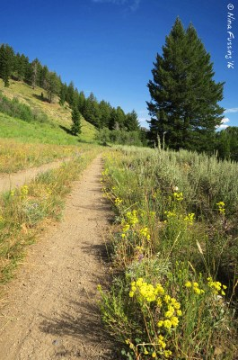Trails and wildflowers everywhere!