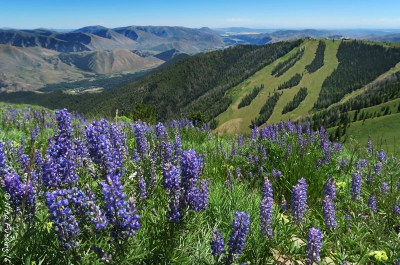 It's wildflowers & views everywhere you go here