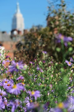 Green Highline Views