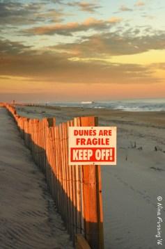 Assateague Dunes