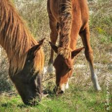 Wild Ponies, Good Friends & A Rocket Launch – Assateague Island, MD