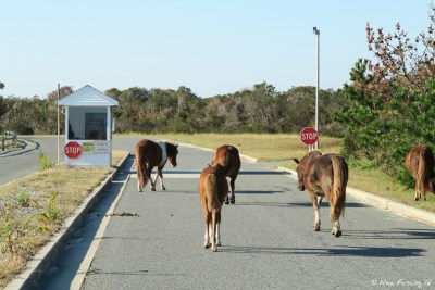 View of entry to the State Park. Wild ponies here!