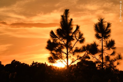 Rare sunset colors
