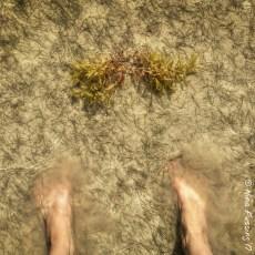 Asses In The Sand & Upcoming Webinar – Florida Keys, FL