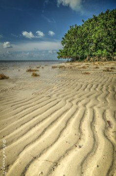 Beach and mangroves
