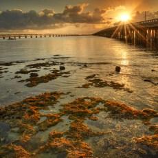 Wildlife, Bridges, Beaches & Friends – Middle/Lower Keys, FL