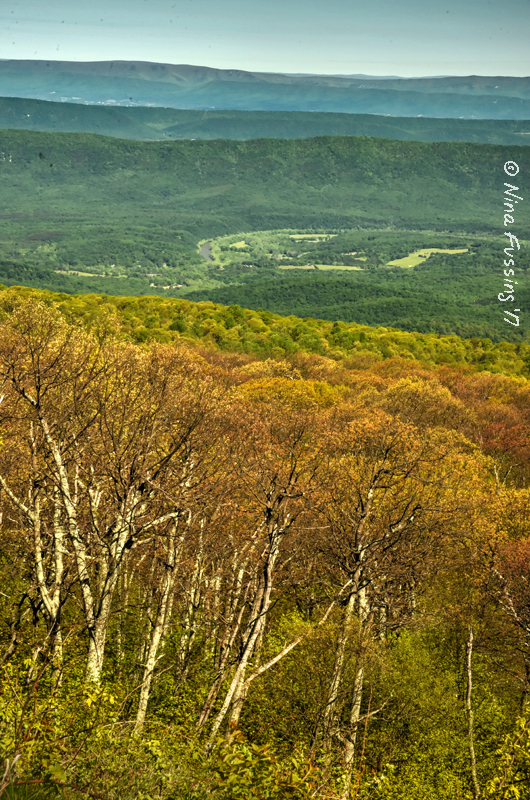 Looking out over Shenandoah Valley