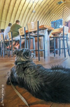 Polly relaxes at Bottomless Brewing