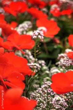 Boothbay Botanical Gardens