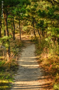 Cape Cod Trails