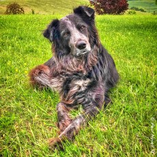 Paws Updates And Other Goings Ons – SW France
