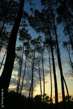 Evening light through the trees