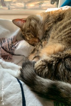 Rand in a deep sleep