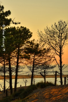 Last light through the trees