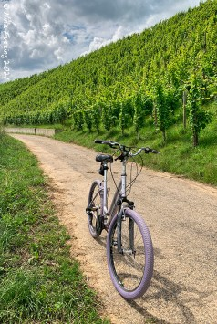 Biking the vineyards by Wasserbillig