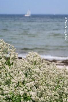 Ærø beaches