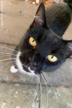 The neighborhood cat in Sweden