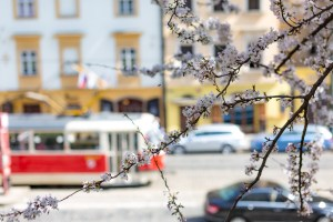 The best places to enjoy Spring in Prague