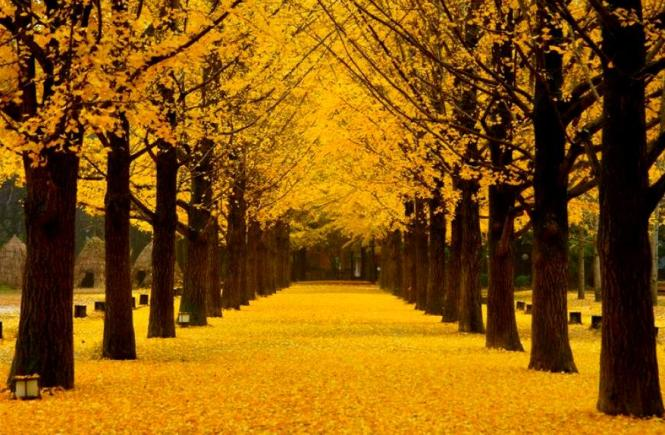 fall nami island korea