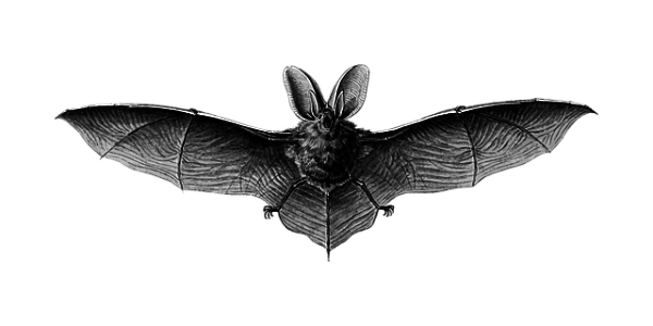 What is Bat Bot and Why Use it?