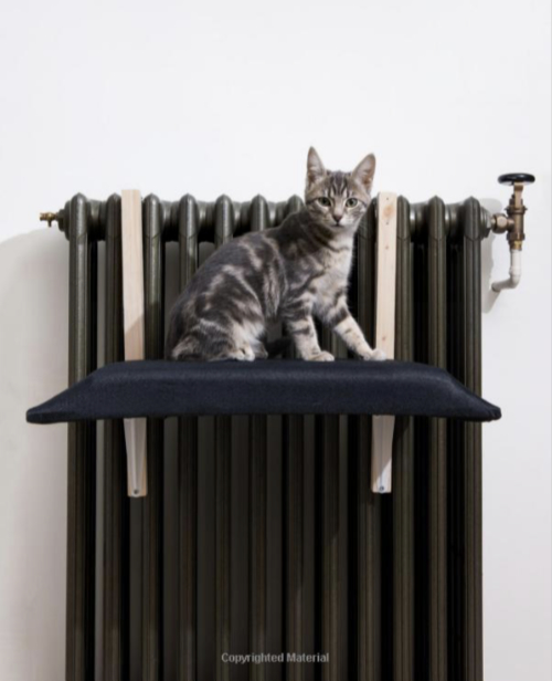 Cat on Radiator Bed
