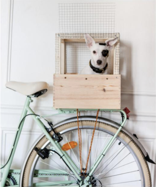 Dog in Bicycle Box