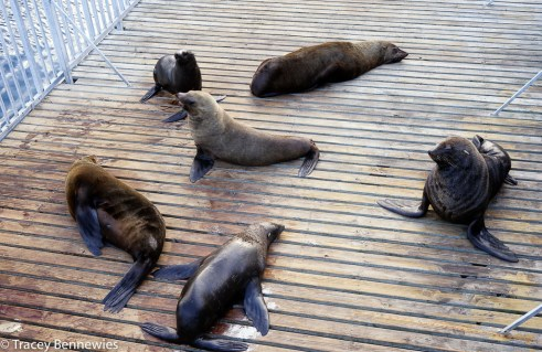 """These seals seem to really enjoy the attention they get on the """"seal platform"""" of the Aquarium"""