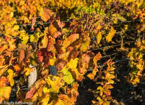 burgundy-wpress-08094