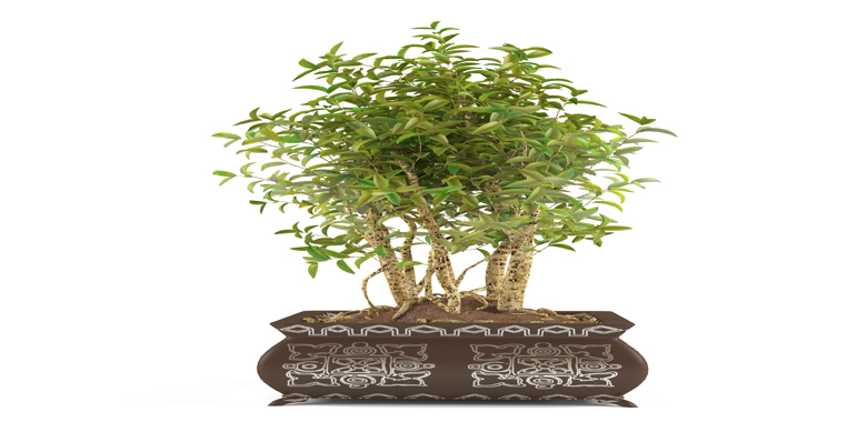 Beautify your home or office with Silk Plants