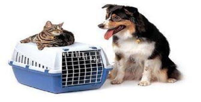 Pet Express: International Pet Travel Experts in Sri Lanka