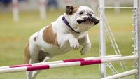 4 Sports To Try With Your Dog