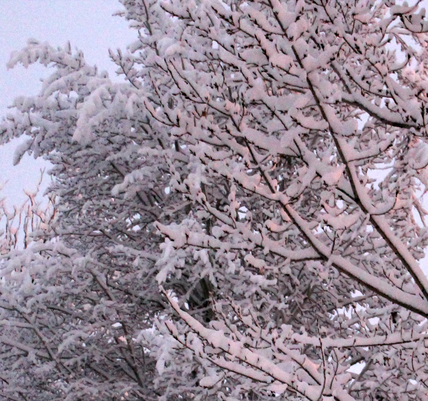 winter gardening tips get ready now so you can plant in the spring