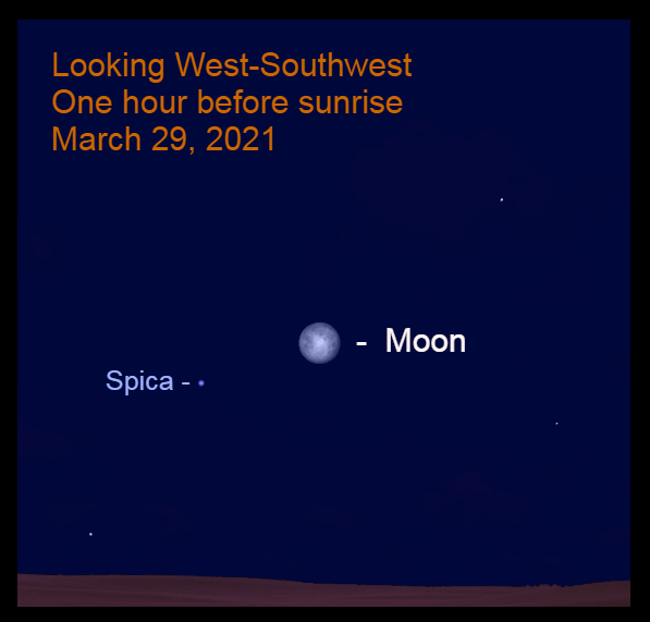 2021, March 29: One hour before sunrise, the nearly Full moon is in the west-southwest, 8.2° to the upper right of Spica.