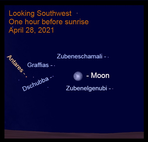 2021, April 28: The bright moon is caught in the Pincers of the Scorpion, Zubenelgenubi and Zubeneschamali, and near the forehead, Dschubba.