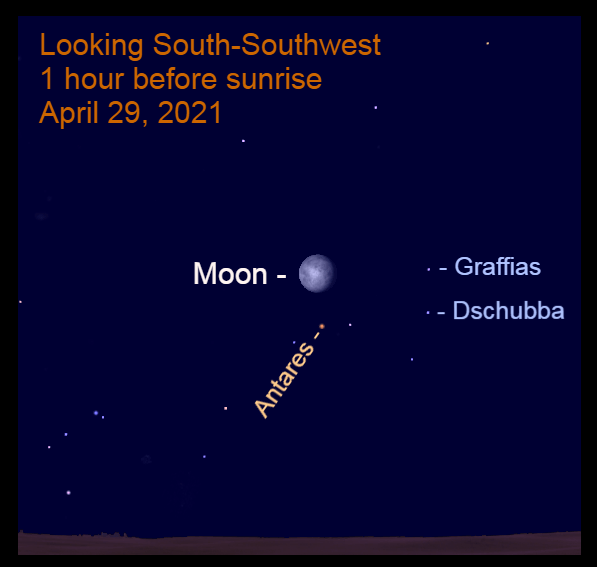2021, April 29: Before sunrise, the bright moon is 3.7° above Antares.