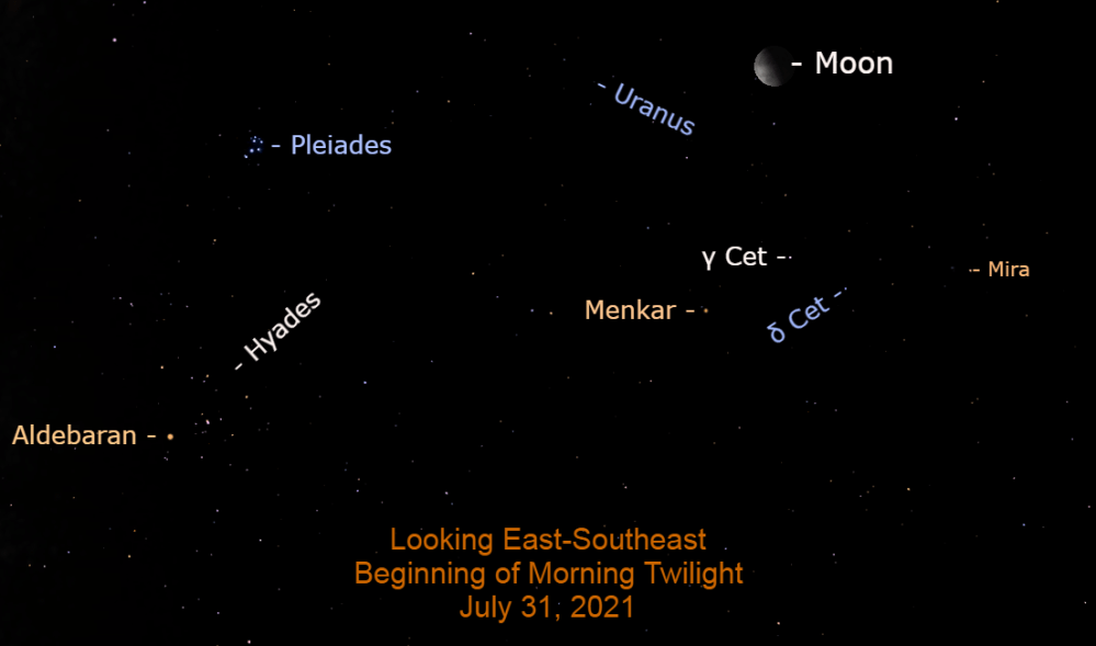2021, July 31: The planet Uranus and variable star Mira are in the moon's vicinity this morning.