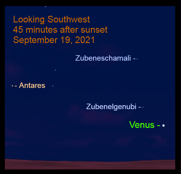 2021, September 19: Venus shines brightly from the west-southwest. It is 5.2° to the lower right of Zubenelgenubi and nearly 30° to the lower right of Antares.