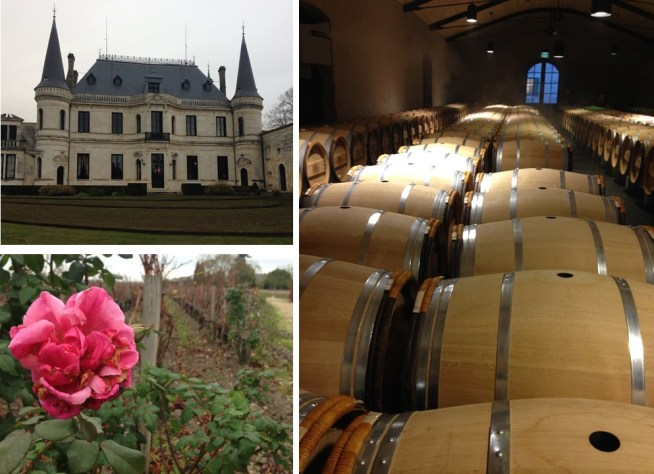 Château Palmer: the rose at the end of the rows, and new barrels waiting to be filled.