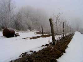 Other techniques for protecting Ontario vines from frost damage include candles and (in extreme circumstances), fire. This is actually not a joke.